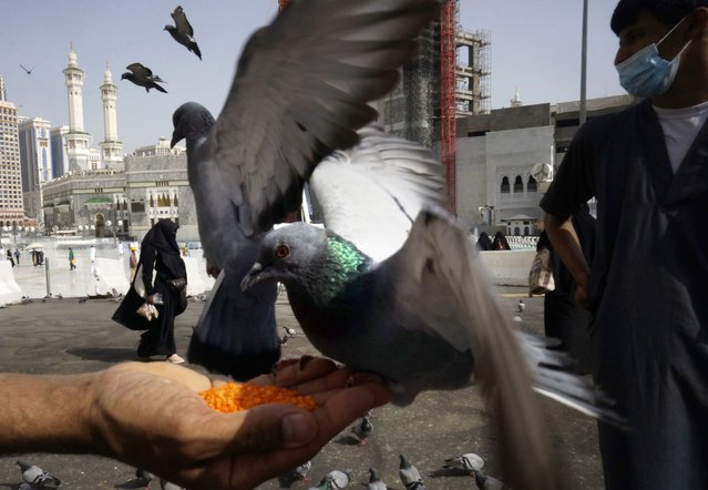 A Muslim pilgrim feeds pigeons outside the Grand Mosque during the minor pilgrimage, known as Umrah, in the Muslim holy city of Mecca, Saudi Arabia, Sunday, May 30, 2021. (Photo by Amr Nabil/AP Photo)
