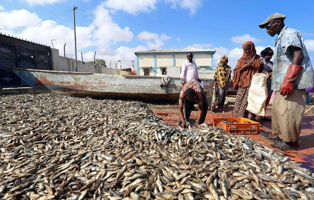 Fishermen prepare fish from their vessels on the shores of the Gulf of Aden in the city of Bosasso, northern Somalia's breakaway Puntland region December 17, 2016. (Photo by Feisal Omar/Reuters)