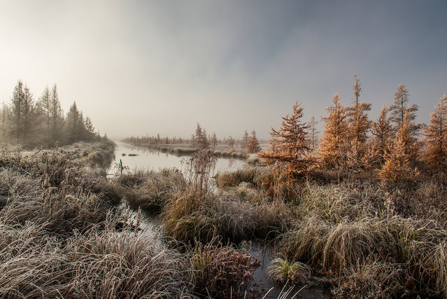 """Frosted Tamarack Swamp"". I had scouted out a few places for an early morning shoot in the tamarack swamps. I searched and searched until I found this scene. With the sun barely breaking through the fog rising from the melting frost, the light lit up the tamarack in front of this ditch. (Photo and caption by Adam Dorn/National Geographic Photo Contest)"