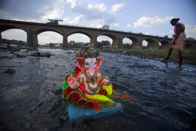 A fisherwoman wades past a previously immersed idol of the Hindu god Ganesh in a tributary of the Mutha river near the village of Khed, about 57 km (35 miles) north of Pune, September 27, 2012. (Photo by Vivek Prakash/Reuters)