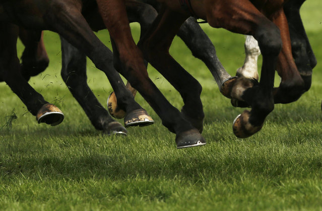 Horse Racing – Crabbie's Grand National Festival – Aintree Racecourse April 10, 2015: General view of horses hooves during the 1.40 the Alder Hay Children's Charity Handicap Hurdle Race. (Photo by Andrew Boyers/Reuters)
