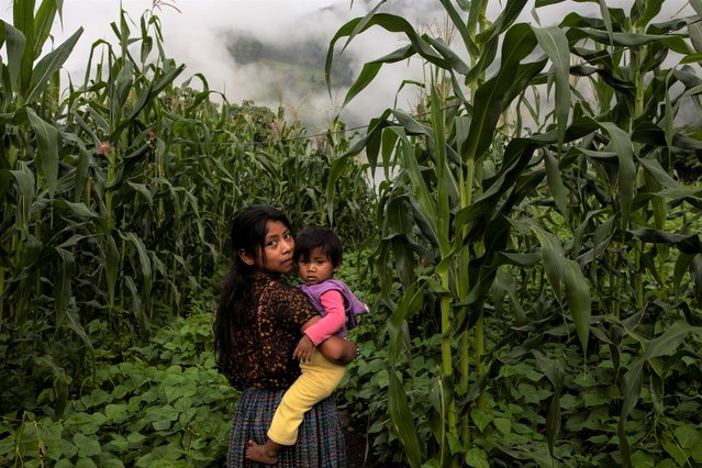 A girl holding a toddler, eyes the camera as she walks through a cornfield in the makeshift settlement Nuevo Queja, Guatemala, Saturday, July 10, 2021. Nuevo Queja is home to about 1,000 survivors from Queja, a community buried in a mudslide triggered by Hurricane Eta. (Photo by Rodrigo Abd/AP Photo)