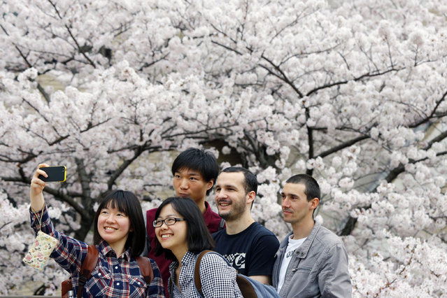 People take a photo in front of blooming cherry blossoms in Tokyo, Wednesday, April 1, 2015. (Photo by Shizuo Kambayashi/AP Photo)