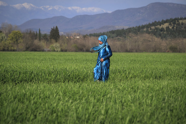 A migrant woman walks in a field at the northern Greek border point of Idomeni, Greece, Sunday, March 20, 2016. German Chancellor Angela Merkel is urging migrants in the squalid tent city at Idomeni, on the Greek-Macedonian border, to trust Greek authorities and leave for better accommodation as thousands are still staying on site after the closure of Macedonia's border. (Photo by Vadim Ghirda/AP Photo)