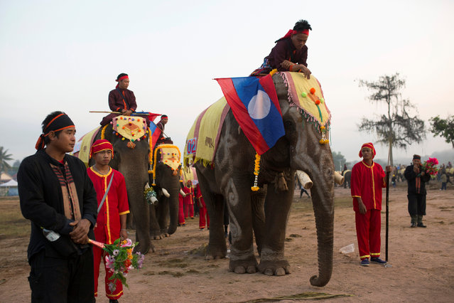 Elephants take part in a parade during Elephant Festival, which organisers say aims to raise awareness about these animals, in Sayaboury province, Laos February 18, 2017. (Photo by Phoonsab Thevongsa/Reuters)
