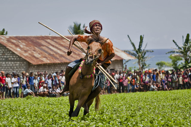 "A Pasola rider reacts after throwing his spear during the Pasola war festival at Ratenggaro village on March 22, 2014 in Sumba Island, Indonesia. The Pasola Festival is an important annual event to welcome the new harvest season, which coincides with the arrival of  ""Nyale"" sea worms during February or March each year. Pasola, an ancient ritual fighting game, involves two teams of men on horseback charging towards each other while trying to hit their rivals with ""pasol"" javelins and avoid being hit themselves. (Photo by Ulet Ifansasti/Getty Images)"