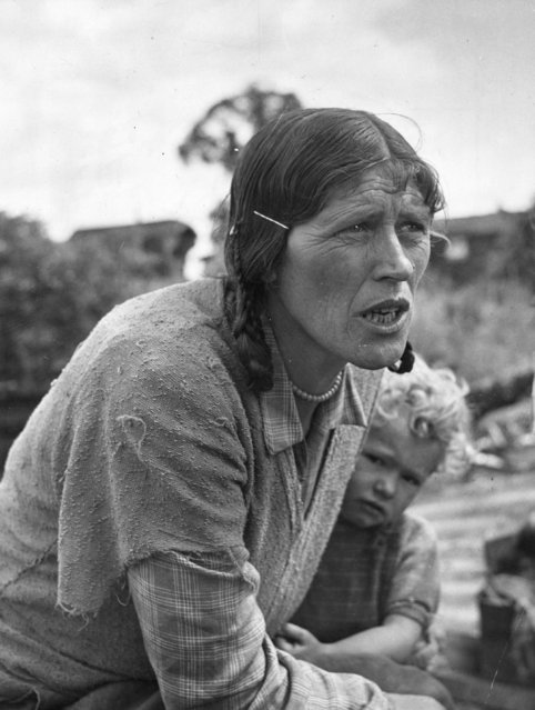 One of the 300 Romanies living on Corke's Meadow in Kent, 28th July 1951. The true gypsies have two prime horrors, officialdom and living in houses. The first is already an issue and they are threatened by the second. (Photo by Bert Hardy/Picture Post/Getty Images)