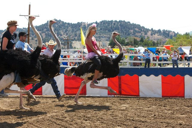 Riders racing ostriches is a common sport in Africa. It's still not exactly clear how it arrived in Virginia City, Nevada – famed home of TV western Bonanza. (Photo by Sol Neelman)