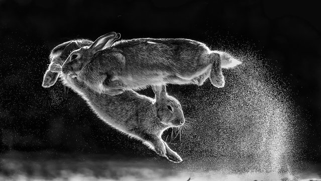 Overall winner and black and white category winner: Jump by Csaba Daróczi (Hungary). (Photo by Daroczi Csaba/2019 Nature Photographer of the Year)