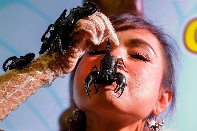 Thailand's Scorpion Queen and Ripley's Ambassador Kanchana Kaetkaew (also spelled Kanjana Ketkaew), places a scorpion on her face at the Ripley's Believe it or Not museum in Pattaya city, Chonburi province, Thailand, 03 June 2017. Kanchana is the only Thai woman to hold two Guinness World Records, currently holds the Guinness World Record for keeping a scorpion in her closed mouth longer than any human being with a time of 3 minutes and 28 seconds, and a second Guinnes world record for staying 33-days inside a 12-meter square glass enclosure with five thousands live scorpions. (Photo by Diego Azubel/EPA)
