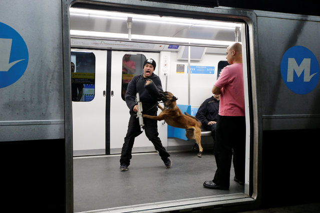 A man, acting as a terrorist, is attacked by a dog from the canine unit of a Brazilian military police battalion, during an instructional exercise with officers of an elite unit of the French police, who is responsible for anti-terrorist actions in France, ahead of the 2016 Rio Olympics at Rio de Janeiro's subway, Brazil, June 10, 2016. (Photo by Ricardo Moraes/Reuters)