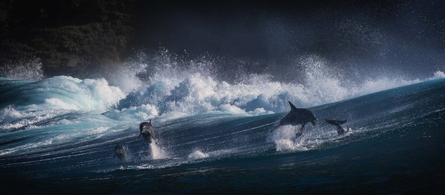 Group of dolphins swimming together. (Photo by Wim van den Heever/Caters News)