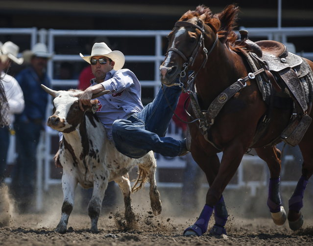 Tyler Waguespack, of Gonzales, La., wins the steer wrestling event during rodeo finals action at the Calgary Stampede in Calgary, Alta., Sunday, July 16, 2017. (Photo by Jeff McIntosh/The Canadian Press via AP Photo)