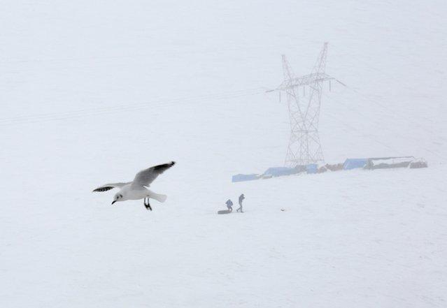 A seagull is seen during a snowstorm in La Cumbre, near La Paz, August 12, 2015. (Photo by David Mercado/Reuters)
