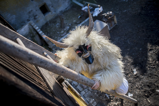 A man wears a busho mask and a costume made of sheep pelt while climbing up a ladder outside a barn in Mohacs, Hungary, 20 February 2020, on the first day of carnival. The traditional Busho carnival, which marks the end of winter, dates back to the 16th century. According to local legend, members of an ethnic South Slavic group living in Mohacs at the time dressed up in similar costumes and wore wooden masks to scare away Ottoman invaders, who mistook them for demons. (Photo by Tamas Soki/EPA/EFE)