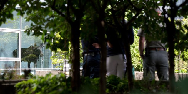 Police and a zoo employee watch a young moose in an administration building of Siemens in Dresden, Germany, Monday August 25, 2014. (Photo by Arno Burgi/AP Photo/DPA)