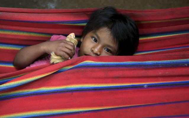 A Colombian Nukak Maku Indian child rests in a refugee camp at Agua Bonita near San Jose del Guaviare of Guaviare province September 3, 2015. Since emerging from the jungle in 2005, half naked and carrying blowpipes, the Nukak have lived in settlements near the frontier town of San Jose del Guaviare, a humid outpost in the Amazon 400 km (250 miles) southeast of the capital Bogota. (Photo by John Vizcaino/Reuters)