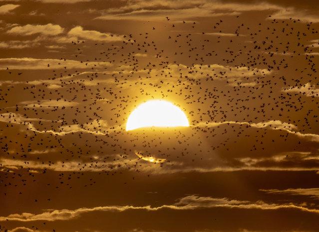Starlings fly by the sun in Wehrheim near Frankfurt, Germany, Sunday, July 19, 2020. (Photo by Michael Probst/AP Photo)