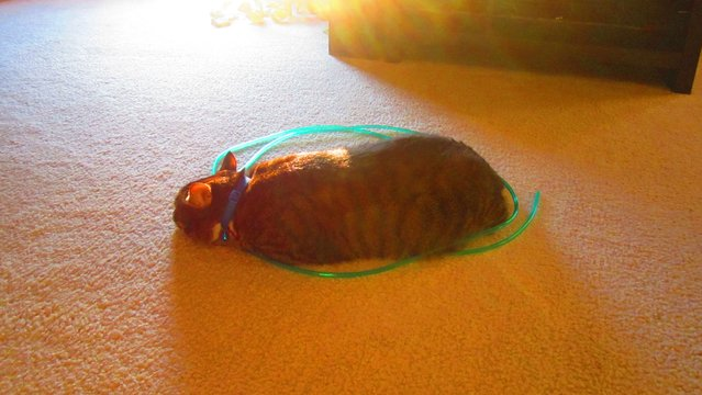New Internet Sensation - Cat Circles
