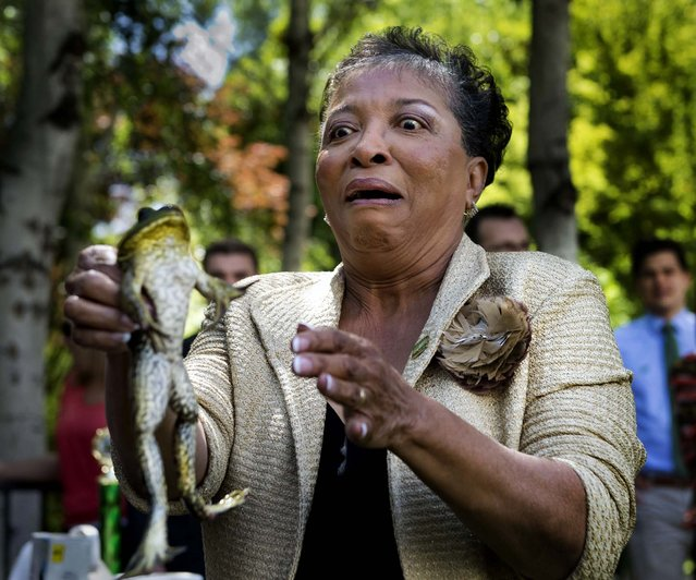 California assemblywoman Cheryl Brown reluctantly holds her frog, Larry B, before the annual frog jump competition at the State Capitol in Sacramento, on April 30, 2013. (Photo by Randy Pench/Sacramento Bee/MCT)
