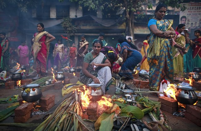 Devotees prepare ritual rice dishes to offer to the Hindu Sun God as they attend Pongal celebrations at a slum in Mumbai January 15, 2015. (Photo by Danish Siddiqui/Reuters)