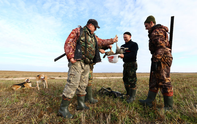 Hunters put a hare that they killed into a bag during a hunt in a field near the village of Novosyolki, Belarus November 5, 2016. (Photo by Vasily Fedosenko/Reuters)
