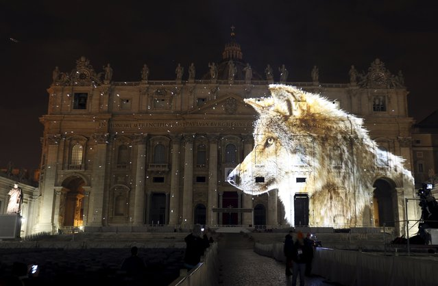 """A picture of a wolf, part of an art projection featuring images of humanity and climate change artistically rendered by Obscura Digital, is projected onto the facade of St. Peter's Basilica, as part of an installation entitled """"Fiat Lux: Illuminating our Common Home"""" as a gift to Pope Francis on the opening day of the Extraordinary Jubilee, at the Vatican, December 8, 2015. (Photo by Stefano Rellandini/Reuters)"""
