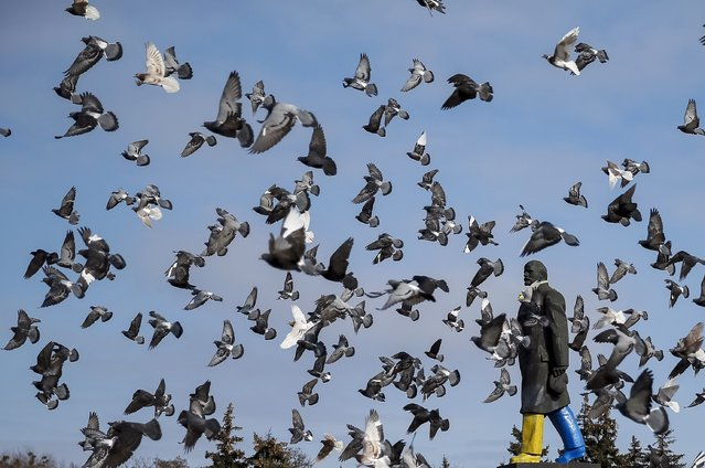 Pigeons fly around a monument of the Soviet state founder Vladimir Lenin painted in the colors of the Ukrainian national flag is seen in Kramatorsk, eastern Ukraine February 11, 2015. President Petro Poroshenko, in a late-night visit to the Ukrainian army's headquarters in the east at Kramatorsk, angrily denounced rocket fire on the area that killed civilians and soldiers. (Photo by Gleb Garanich/Reuters)
