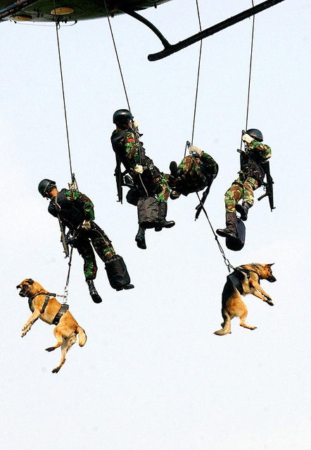 Soldiers with dogs from the Armed Special Forces descend by rope from a helicopter during an anti-terror drill in Jakarta, 20 October 2003. (Photo by Bay Ismoyo/AFP Photo)