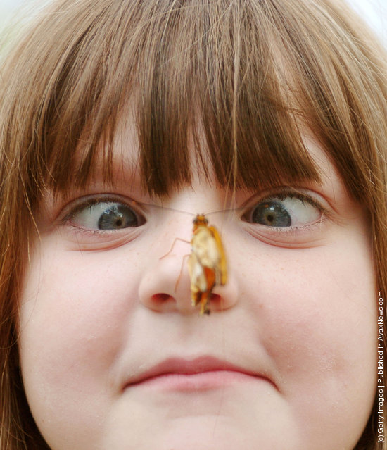 Elizabeth Gee, six-years-old, looks at a butterfly on her nose at the Butterfly Show in Cincinnati, Ohio