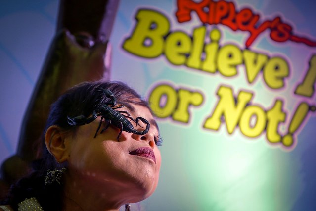 Thailand's Scorpion Queen and Ripley's Ambassador Kanchana Kaetkaew (also spelled Kanjana Ketkaew), poses with a scorpion on her face at the Ripley's Believe it or Not museum in Pattaya city, Chonburi province, Thailand, 03 June 2017. (Photo by Diego Azubel/EPA)