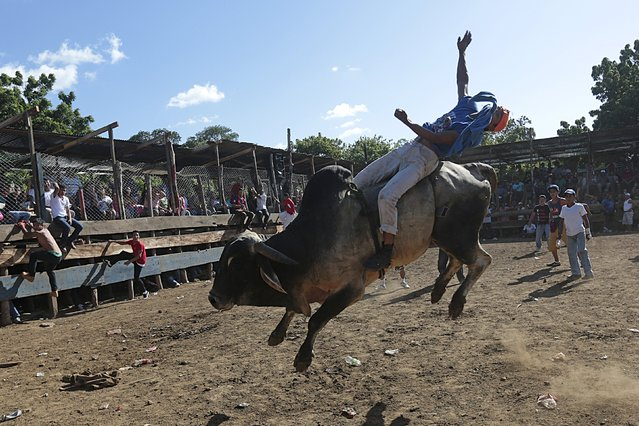 A man rides a bull during festivities honouring the capital's patron saint Santo Domingo de Guzman in Managua, Nicaragua August 2, 2015. (Photo by Oswaldo Rivas/Reuters)