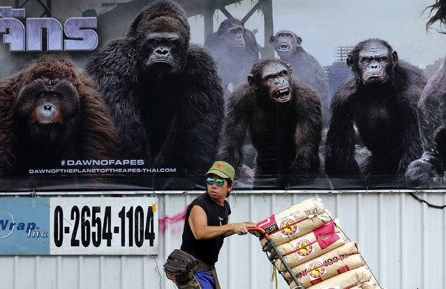 "A man pushing goods for sale under a large billboard for the movie ""Dawn of the Planet of the Apes"", in the busy streets of the Thai capital  Bangkok, Thailand, July 1, 2014. Thailand's ruling military junta, installed in a May 2014 coup d'etat, is focusing on projects to drive the Thai economy upwards and reinstall confidence in the future ahead of elections in 2015. (Photo by Barbara Walton/EPA)"