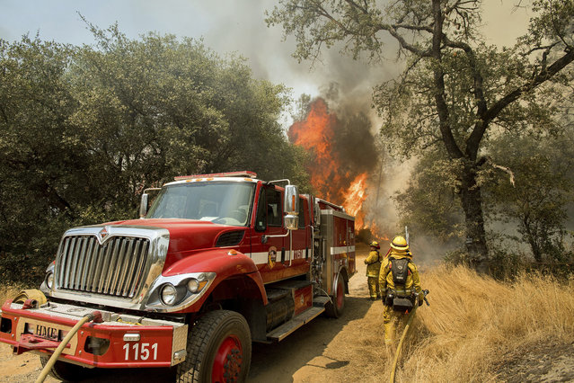 Firefighters battle a wildfire near Oroville, Calif., on Saturday, July 8, 2017. The California Department of Forestry and Fire Protection reported that several residents and one firefighter suffered minor injuries. Residents were ordered to evacuate from several roads in the rural area as flames climbed tall trees. (Photo by Noah Berger/AP Photo)