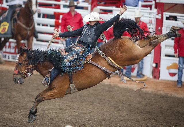 Zeke Thurston, of Big Valley, Alberta, rides Get Smart to win the saddle bronc rodeo finals at the Calgary Stampede in Calgary, Alberta, Sunday, July 16, 2017. (Photo by Jeff McIntosh/The Canadian Press via AP Photo)