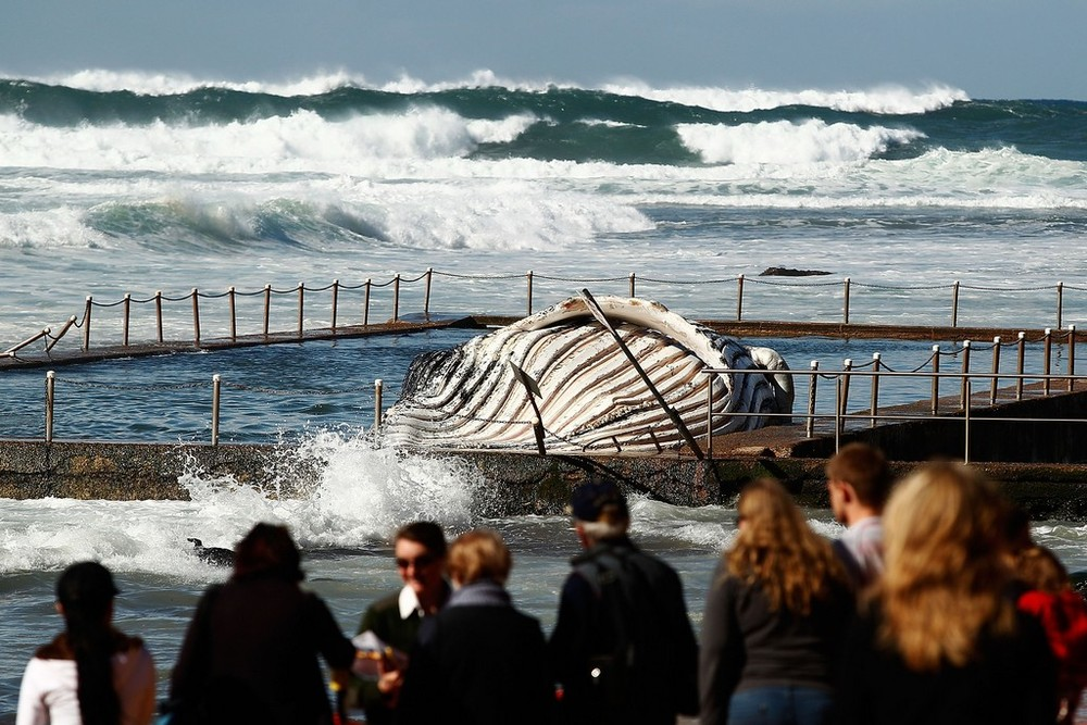 Lost Spirit Will Rest in Secret Bush Graveyard for Whales