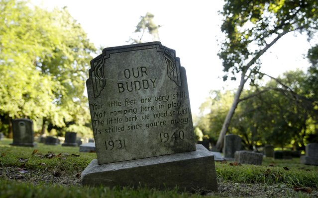 """The gravestone of """"Our Buddy"""" is seen at the Aspin Hill Memorial Park in Aspen Hill, Maryland August 25, 2015. (Photo by Gary Cameron/Reuters)"""