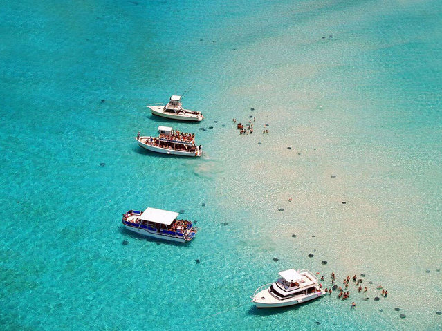 Stingray City, Grand Cayman