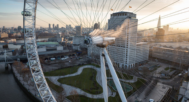 Cleaning experts clean the London Eye. (Photo by Caters News Agency)