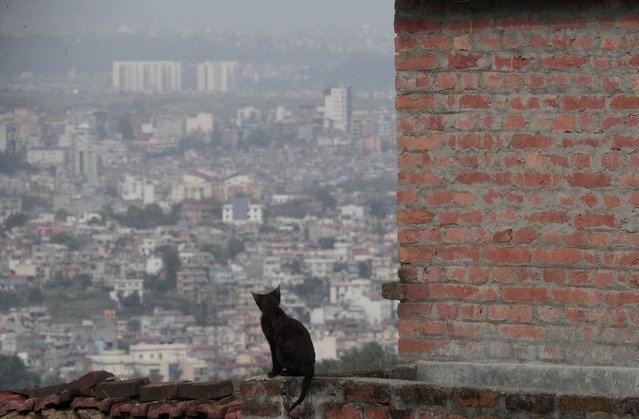 A cat sits on the balcony of a house during lockdown to control the spread of the new coronavirus in Kathmandu, Nepal, Friday, May 1, 2020. Nepal has extended the lockdown to May 7 and closure of the international border to May 13. (Photo by Niranjan Shrestha/AP Photo)