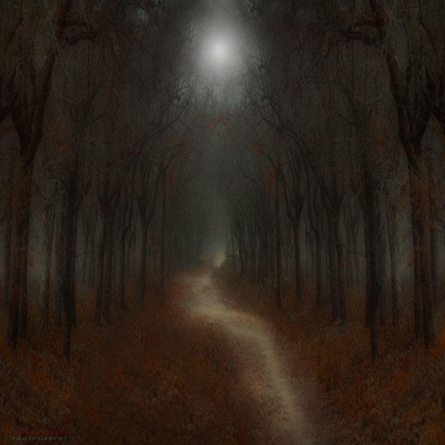 Full moon. (Ildiko Neer)