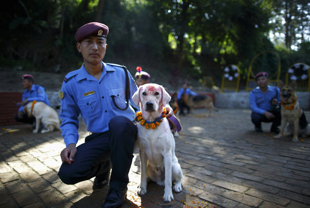 A police officer and his dog sit together during the dog festival as part of celebrations of Tihar at Nepal Police Academy in Kathmandu October 22, 2014. (Photo by Navesh Chitrakar/Reuters)