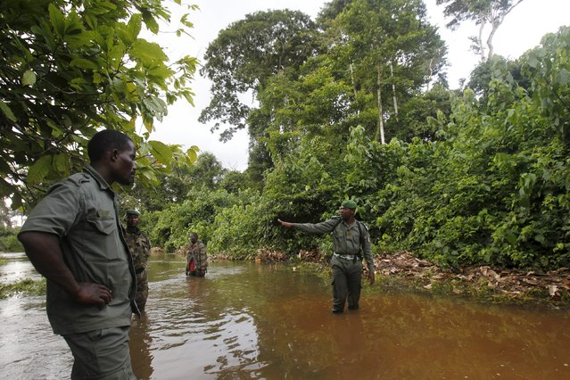 Agents of the OIPR, one of the government agencies charged with managing protected land, patrol inside Mont Peko National Park in Duekoue department, western Ivory Coast August 18, 2015. (Photo by Luc Gnago/Reuters)