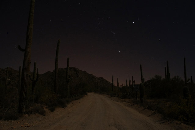 """Moonlit Hohokam Road, Saguaro National Park West, Arizona"". After a full day's hike around Saguaro, I found myself returning in the darkness, having once again miscalculated my daylight allowance. I stepped carefully along the darkening trail, scanning the ground for silhouettes of rattlesnakes and spiny chollas. Luckily, this was a full-moon night, and my path was soon illuminated with a blue-grey haze, criss-crossed with shadows of tall cactus sentinels. I finished my hike by moonlight, and stopped to take this picture on the drive back to my campsite. (Photo and caption by Matt Relkin/National Geographic Traveler Photo Contest)"