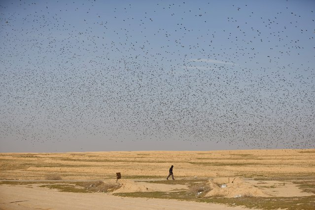 A man walks below a murmuration of migrating starlings in the sky near the southern Israeli city of Beer Sheva December 28, 2015. (Photo by Amir Cohen/Reuters)