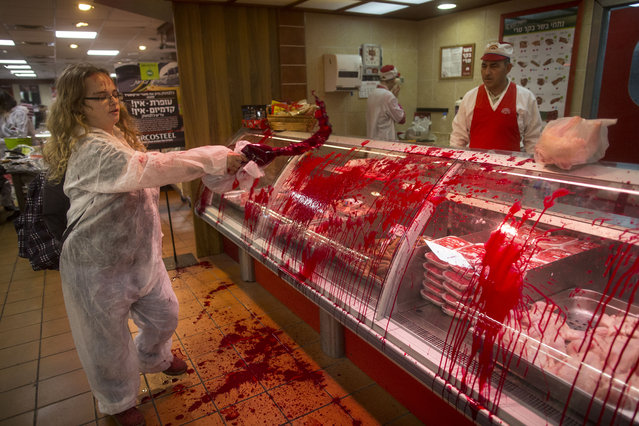 """An animal rights activist spills mock blood on a meat display window at the Soglowek meat factory shop on November 20, 2013 in Nahariya, Israel. Activists from the Israeli animal rights movement """"269Life"""" were arrested after they protested in the shop. Last year some of the movement's activists branded themselves with the numbers 269 in solidarity with a calf from an Israeli farm who had been branded with the same numbers.  (Photo by Uriel Sinai/Getty Images)"""
