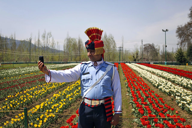 "A Jammu and Kashmiri state traffic policeman takes a ""selfie"" during the season's opening of Siraj Bagh, claimed to be the largest tulip garden in Asia, on Zabarwan Hills in Srinagar, India, Monday, April 6, 2015. The opening of Kashmir's flower garden, unfolding over 1.2 million tulip bulbs of nearly 60 varieties, marks the beginning of a new tourism season in the valley. (Photo by Mukhtar Khan/AP Photo)"