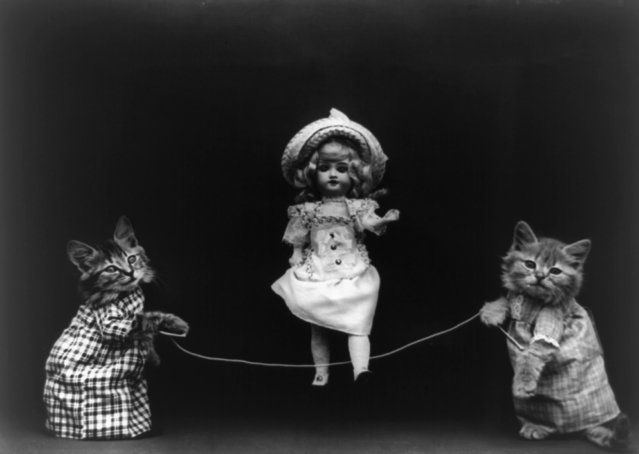 Two cats, dressed as humans, holding rope, which doll appears to be skipping, 1914. (Photo by Harry Whittier Frees/Library of Congress)
