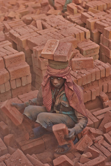 A young worker piles bricks on top of his head in the midst of a vast pile of bricks from the kiln in Kathmandu Valley, Nepal, 12 January 2014. (Photo by Jan Moeller Hansen/Barcroft Images)