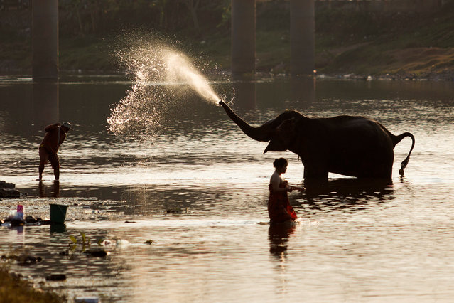 A mahout baths an elephant before taking part in the Elephant festival to raise awareness about elephants, in Sayaboury province, Laos February 17, 2017. (Photo by Phoonsab Thevongsa/Reuters)